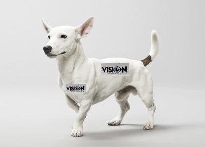 chien-avec-autocollant-vp-001